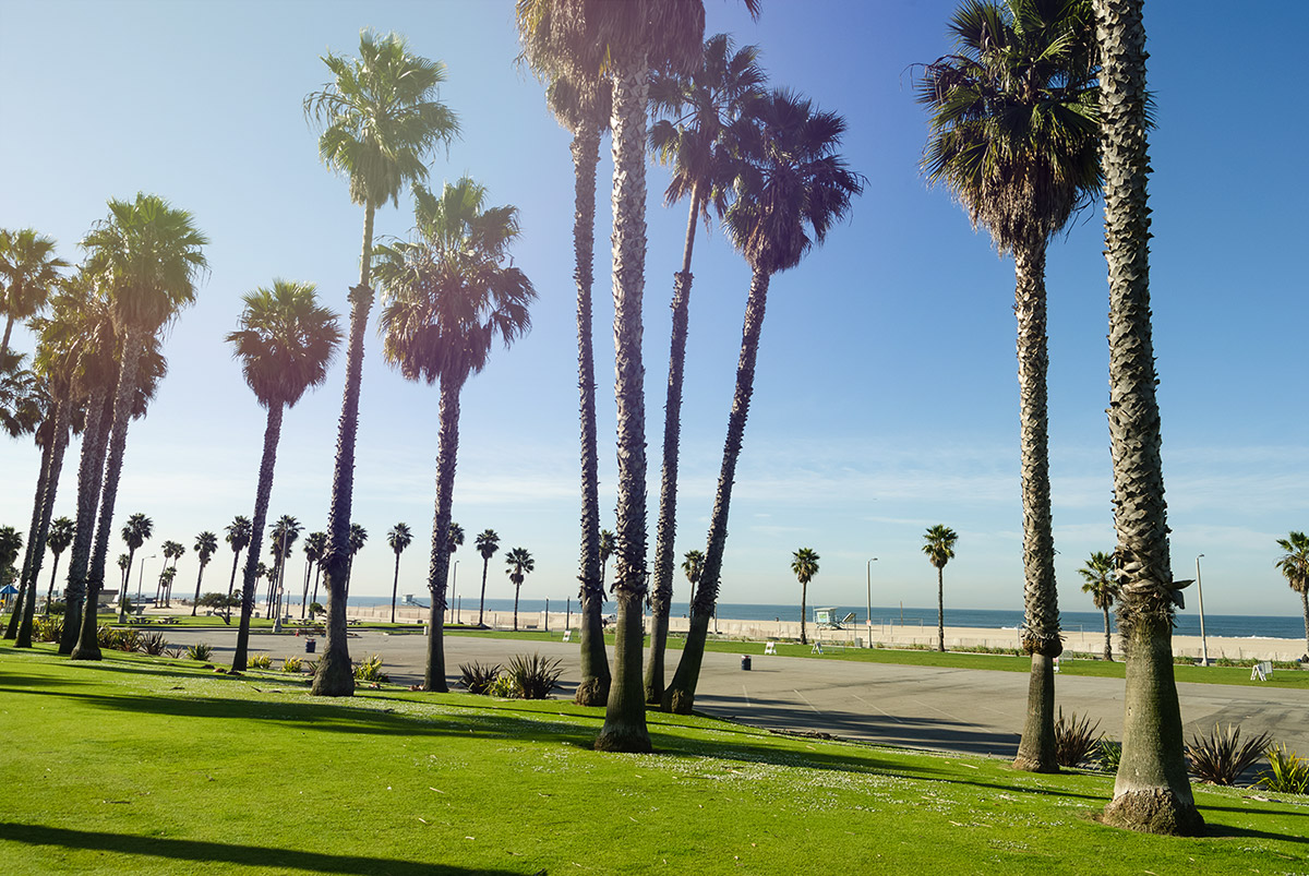 palmtrees_santamonica