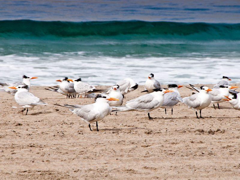 torrance_beach