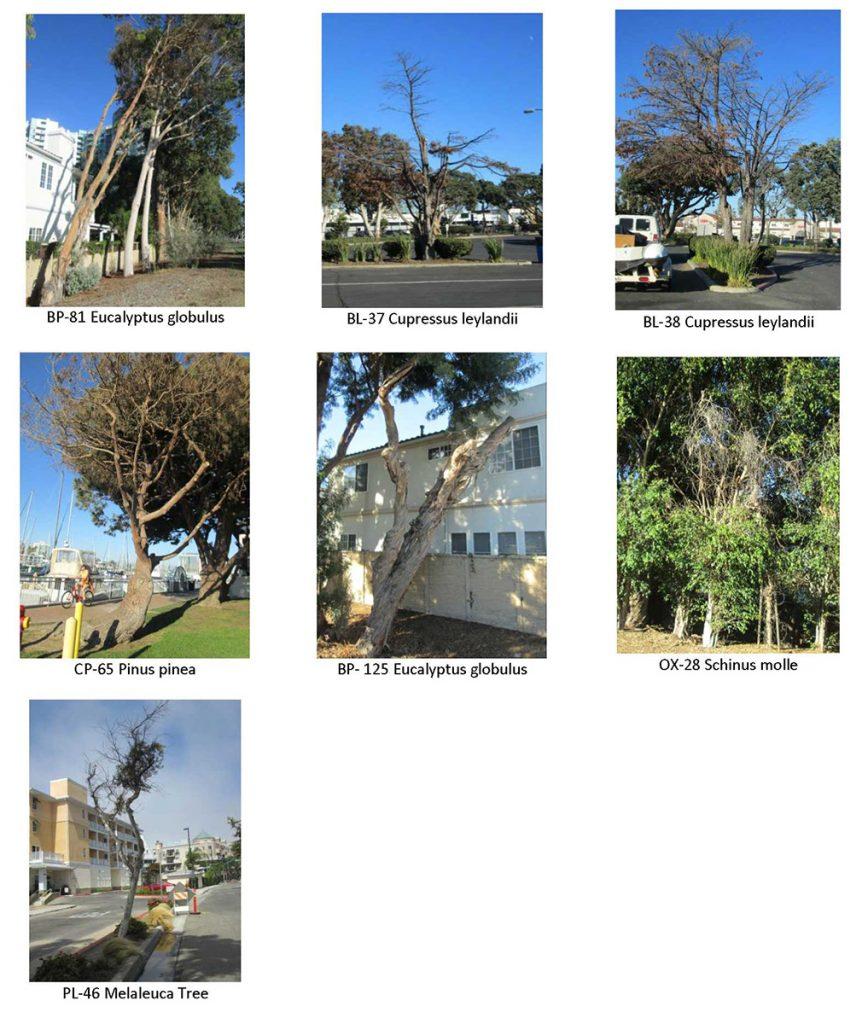 tree maintenance_pics